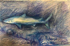 Alphonse Deep Shark